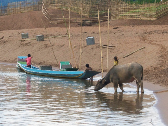 Water Buffalo and village on the river