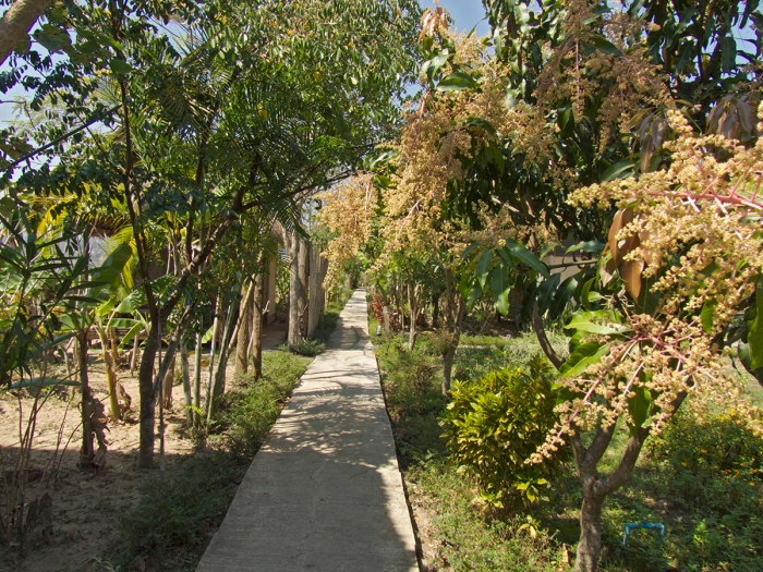 Walk way through garden