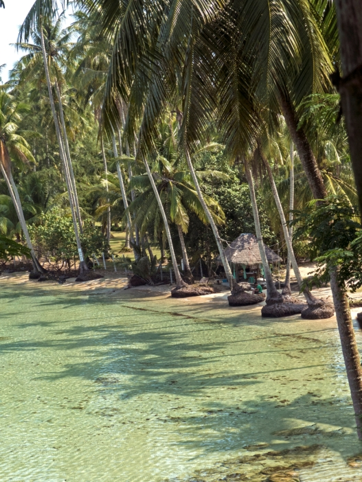 Palm trees and clear water in a bay near Horizon Resort