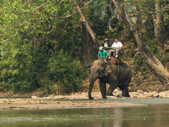 Elephant rides in The Kok river