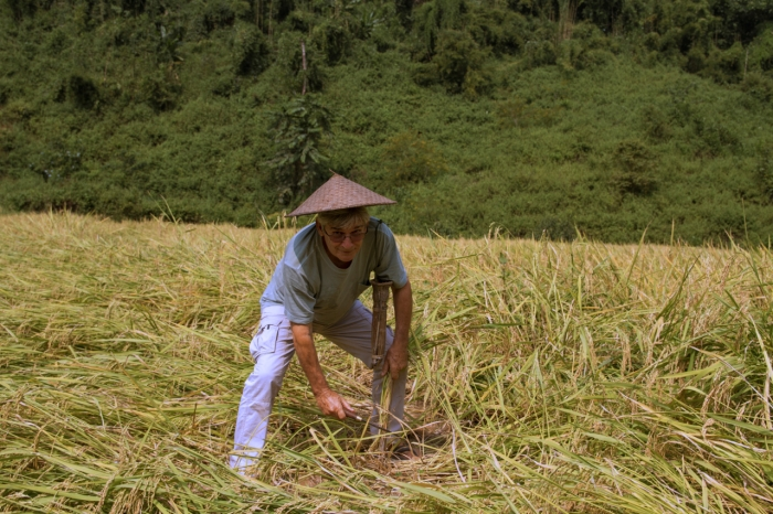 Michel cutting rice