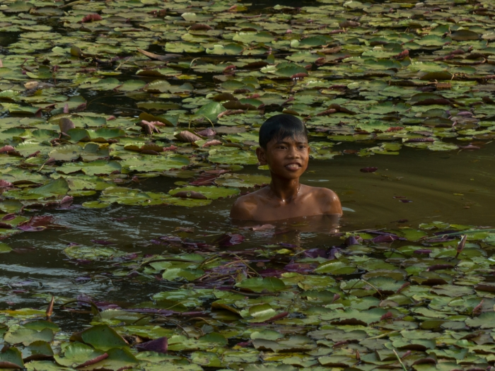 Laos - boy swimming for Lotus flowers